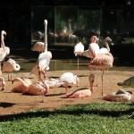 IMG_3230_light_argentine Iguazu