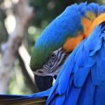 IMG_3327_light_argentine Iguazu