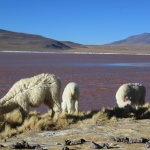 IMG_6137_light_bolivie salar