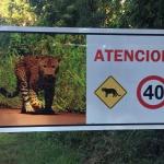 Photo 29-04-2016 17 22 48_light_argentine Iguazu