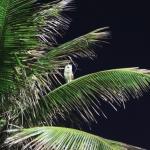 IMG_2541_light_brazil2